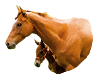 北海道産サラブレッド馬